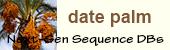 Date palm logo