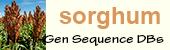 Sorghum logo