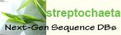 Streptpchaeta logo