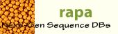 Brassica rapa logo